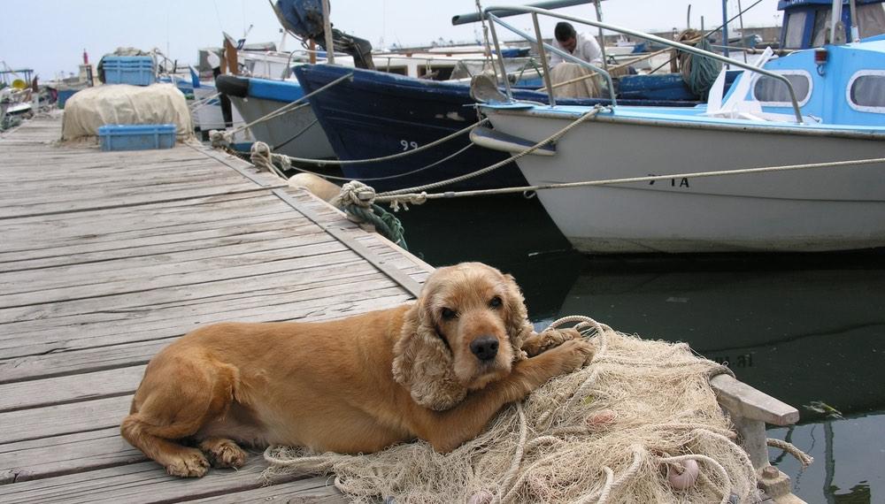 A dog at a marina