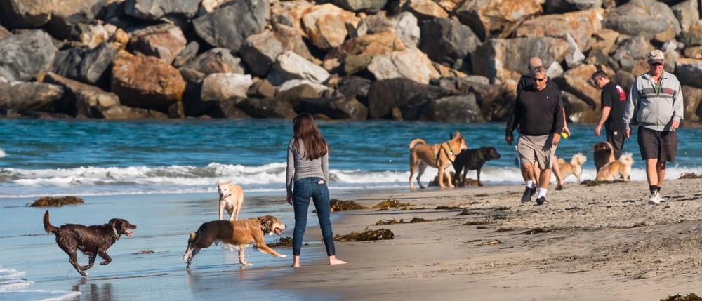 dog beach in San Diego